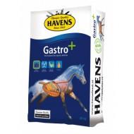 HAVENS GASTRO +