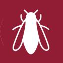 Protection contre les taons et les insectes